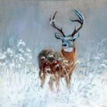 Winter Deer Feeding:  Helpful  or Harmful