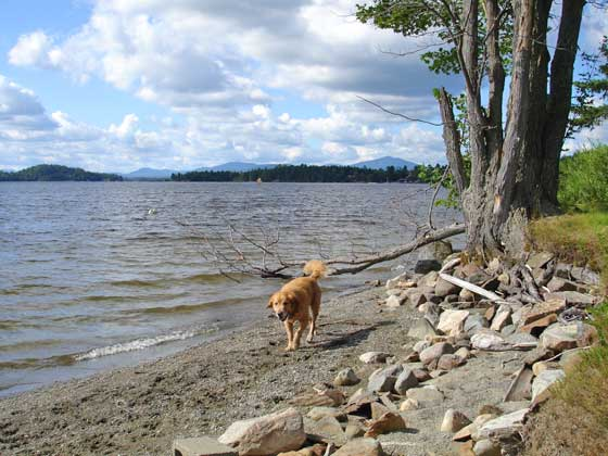 Dog friendly Rangeley Maine - Rangeley tourist attractions for you and your 4 legged friend