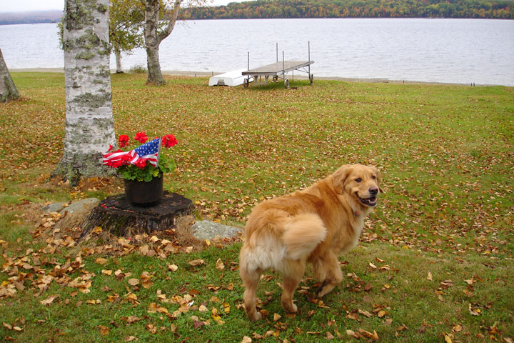 Dog friendly Rangeley Lakes Region