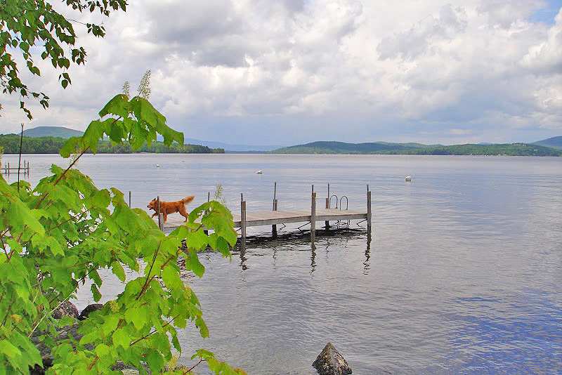 Pet friendly lodging at Niboban Camps on Rangeley Lake