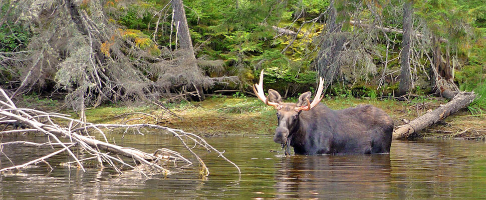 oquossoc dating site Oquossoc, maine — for the  hunters gather in oquossoc for annual moose  applicants received one bonus chance for each year of participation dating.