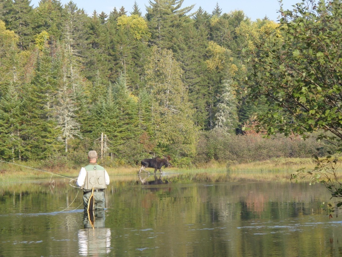 Outdoor adventure series flyfish the rapid river for Fly fishing maine